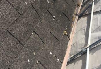 堺市の雨漏り屋根 工事開始