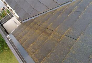 屋根北側の苔